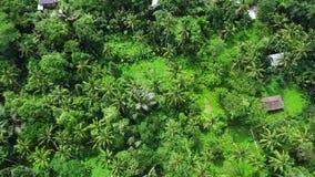 Padievelden in vallei door beboste bergen in landelijk Azië wordt omringd dat stock videobeelden