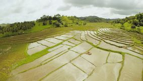 Padievelden van de Filippijnen Het Eiland Bohol Pablacion Anda stock videobeelden