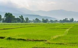 Padieveldgebieden in Terai, Nepal Stock Afbeeldingen