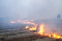 Padieveldstoppelveld op brand Stock Fotografie