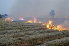 Padieveldstoppelveld op brand Stock Foto's