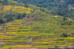 Padieveldterras dichtbij Katmandu royalty-vrije stock afbeelding
