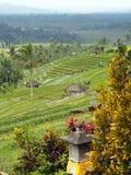 Padieveldterras, kleine tempel voor het aanbieden en palmen in Bali, Indonesië royalty-vrije stock fotografie