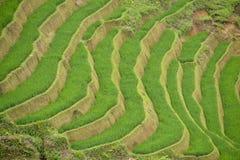 Padieveldterras van Sa-Pa Stock Foto's