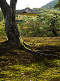 Padiglione dorato di Kinkakuji visto dal giardino Immagini Stock