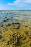Padina australis Hauck or Padina pavonica brown algae in the sha Stock Images