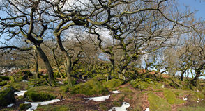 Padley Gorge Ancient Woodland. Ancient Woodland set in Padley Gorge, Detbyshire on a sunny day Royalty Free Stock Photo