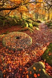Padley Gorge in the Autumn & an old millstone whee Stock Photos