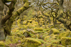 Padley Gorge in the Peak District Stock Images