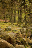 Padley Gorge in the Peak District Royalty Free Stock Image
