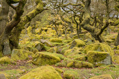 Padley Gorge in the Peak District Royalty Free Stock Photos