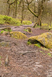 Padley Gorge in the Peak District Stock Image