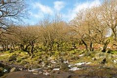Padley wąwozu Antyczny las Derbyshire fotografia royalty free