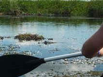 Padling caimans πλησίον Esteros del Ibera στοκ εικόνες