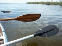 Padling caimans πλησίον Esteros del Ibera στοκ φωτογραφίες