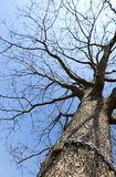 Padlock on tree Stock Photos