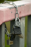 Padlocks on a chain Stock Photography