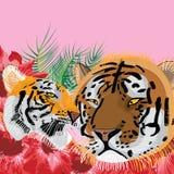 Padre della madre di amore della tigre Fotografie Stock Libere da Diritti