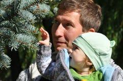 Padre e bambino che esaminano l'abete rosso blu fotografia stock libera da diritti