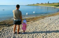 Padre e figlia che esaminano i cigni sulla spiaggia immagini stock