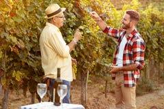 Padre e figlio che controllano l'uva prima del raccolto Immagini Stock Libere da Diritti