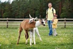 Padre e figlio che esaminano due lame del bambino Fotografia Stock