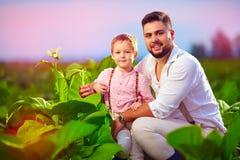 Padre e figlio felici sulla loro piantagione del tabacco, al tramonto Fotografia Stock