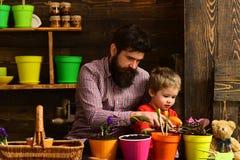 Padre e figlio Giorno di padri Cura del fiore Fertilizzanti del suolo Giorno della famiglia serra bambino barbuto del ragazzino e fotografia stock libera da diritti