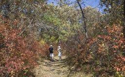 Padre e hijo adolescente que caminan en un rastro en un día caliente de la caída Imagen de archivo