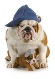 Padre e hijo del perro Fotos de archivo