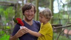 Padre e hijo en un parque del pájaro alimentar un loro rojo que asiste en el hombro del padre con una leche almacen de metraje de vídeo