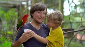 Padre e hijo en un parque del pájaro alimentar un loro rojo que asiste en el hombro del padre con una leche almacen de video
