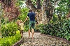 Padre e hijo que caminan en un pavimento de adoquín texturizado, Reflexolog Imágenes de archivo libres de regalías