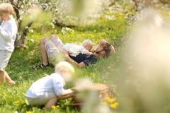 Padre e tre bambini che si rilassano al picnic nel frutteto del fiore Fotografie Stock Libere da Diritti