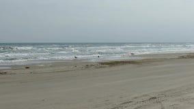 PADRE ISLAND, TX - 13 FEB 2015: Vehicle drives on beach along Gulf of Mexico. PADRE ISLAND, TX - 13 FEB 2015: Vehicle drives left to right on beach along Gulf stock footage