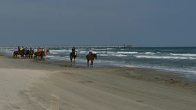 PADRE ISLAND, TX - 13 FEB 2015: Women riding horses on beach along the Gulf of Mexico. PADRE ISLAND, TX - 13 FEB 2015: Women riding horses on beach along the stock video