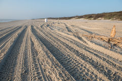 Padre Island Vehicle Tracks Down The Beach Royalty Free Stock Photography