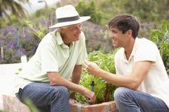 Padre mayor And Adult Son que trabaja en huerto Imágenes de archivo libres de regalías