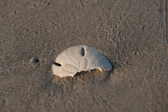 Padre wyspy piaska dolara połówka obrazy stock