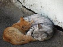 Padre y niño y x28; version& x29 del gato; fotos de archivo libres de regalías
