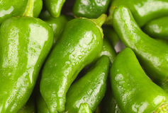 Padron pepper background Stock Photo
