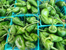 Padron pepper, Capsicum annuum Stock Photo