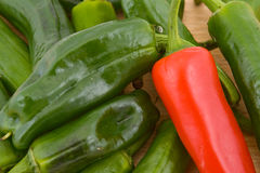 Padron Peppers Royalty Free Stock Photography