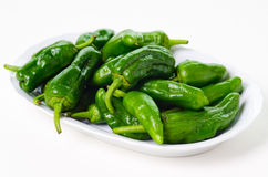 Padron peppers Royalty Free Stock Image
