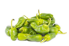 Padron peppers. royalty free stock photo