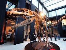 PADUA, ITALIË - JANUARI 6, 2017: een carolinii van de wederopbouwgiganotosaurus van het dinosaurusskelet Stock Foto