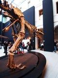 PADUA, ITALIË - JANUARI 6, 2017: een carolinii van de wederopbouwgiganotosaurus van het dinosaurusskelet Stock Foto's