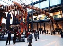 PADUA, ITALIË - JANUARI 6, 2017: een huinculensis van de wederopbouwargentinosaurus van het dinosaurusskelet Stock Foto