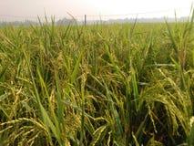 pady поле Стоковое Изображение RF