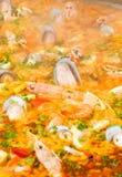 Paella de plan rapproché Image libre de droits
